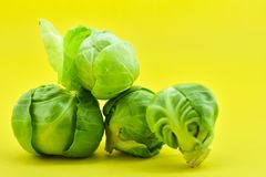 Brussels sprouts on yellow background royalty free stock photo
