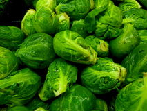 Brussels sprouts. Close up of green Brussels sprouts in pile with water drops Royalty Free Stock Photo