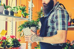 Brutal bearded flower seller with tattoos on his arms in a flowe. R shop stock image
