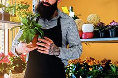 Brutal bearded flower seller with tattoos on his arms in a flowe. R shop stock photos