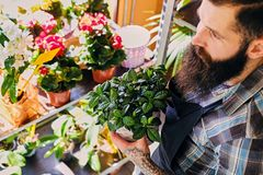 Brutal bearded flower seller with tattoos on his arms in a flowe. R shop royalty free stock photos