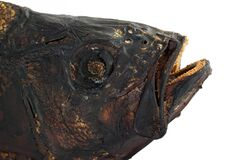 Brutal smoked salty fish head  isolated white background