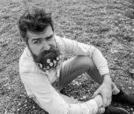 Brutale macho met madeliefje of kamillebloemen in baard Hipster op strikt nadenkend gezicht zit op gras de lente stock afbeeldingen