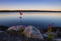 Brutality and beauty of Karelian nature. Sunset on the Karelian lake Stock Photography