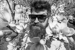 Brutalizmu i czułości pojęcie Brutalna macho uśmiechnięta pobliska oferta kwitnie na słonecznym dniu Mężczyzna z brodą i wąsy obraz stock