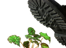 Brute military boots and plant Stock Image