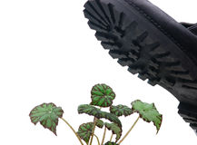 Brute military boots and plant. Isolated on a white background royalty free stock photos