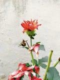 Bruten blomma royaltyfria bilder