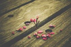 Bruten blomma Royaltyfri Foto