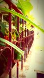 bruten grönska Royaltyfria Bilder