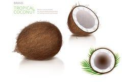 Bruten och hel kokosnöt royaltyfri illustrationer