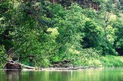 Bruten trädfilial Fotografering för Bildbyråer