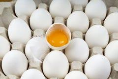 Brutet ägg på magasinet med fjädrar royaltyfri foto