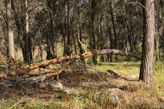 Bruten tree Arkivfoto