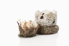 Brutet easter ägg i gräs Arkivbild