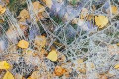 Brutet exponeringsglas ligger på jordningen med höstsidor royaltyfri bild