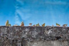 brutet exponeringsglas på staketet, att skydda Royaltyfri Bild