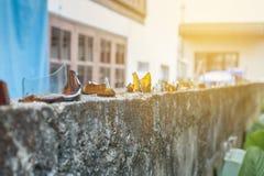 brutet exponeringsglas på staketet, att skydda Royaltyfria Foton
