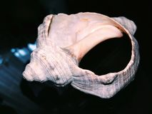 Brutet gammalt hav för snäckskal arkivfoto