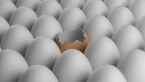 Brutet gult ägg Arkivfoton