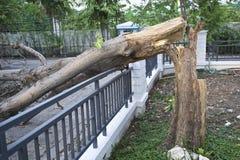 Brutet träd efter storm Fotografering för Bildbyråer