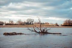 Brutet träd som svävar i den vår översvämmade floden arkivfoton
