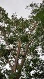 Brutet träd vid den tunga stromen arkivbilder