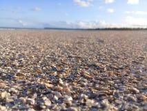 Brutna skal p? stranden arkivfoton
