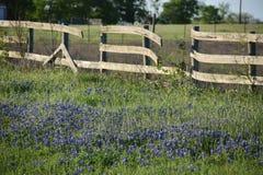 Brutna staket- och blåtthättor 2018 royaltyfria foton