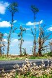Brutna stupade träd Brutna träd i efterdyningen av en orkan Ukraina Cherkassy region, sommar 2017 Royaltyfri Foto