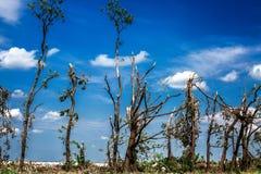 Brutna stupade träd Brutna träd i efterdyningen av en orkan Ukraina Cherkassy region, sommar 2017 Royaltyfri Bild