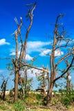 Brutna stupade träd Brutna träd i efterdyningen av en orkan Ukraina Cherkassy region, sommar 2017 Royaltyfria Bilder