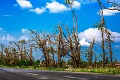 Brutna stupade träd Brutna träd i efterdyningen av en orkan Ukraina Cherkassy region, sommar 2017 Arkivfoton
