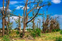 Brutna stupade träd Brutna träd i efterdyningen av en orkan Ukraina Cherkassy region, sommar 2017 Arkivfoto