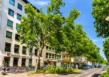 Brutna träd i centret av Dusseldorf royaltyfri fotografi