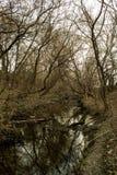 Brutna träd och liten flod arkivbilder