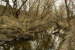 Brutna träd och liten flod royaltyfri fotografi