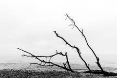 Brutna trädfilialer på stranden efter storm Svartvitt hav Royaltyfri Bild