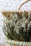 Bruyère blanche dans le panier en osier Photos stock
