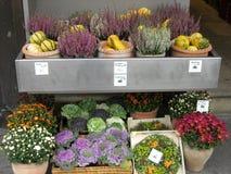 Bruyère de fleurs de potirons Photos stock
