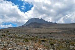 Bruyère de haute altitude sur un fond de montagne, le mont Kilimandjaro, Tanzanie photos stock