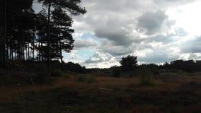 Bruyère et nuages Image libre de droits