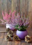 Bruyères dans des pots et des cônes en céramique Images stock