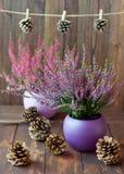 Bruyères dans des pots et des cônes en céramique Images libres de droits