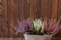Bruyères dans un pot en métal sur les planches en bois Photos libres de droits