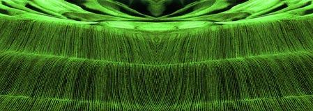 Bruzdy Zielone Zdrowe uprawy w polu Obrazy Royalty Free