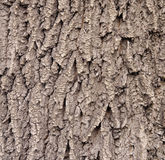 Brwon cracked bark on old oak tree. Closeup Stock Image