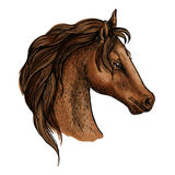 Brwon horse head profile portrait Stock Photo