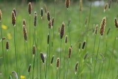 bryan łąki Zdjęcie Stock