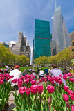Bryant Park and buildings, New York City Royalty Free Stock Photography